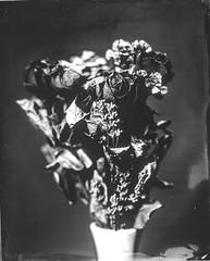 (Attila Pasek (Albums!)) Tags: stilllife 127mmf47 macro ambrotype wetplatecollodion largeformat blackandwhite collodion bw 4x5 anniversaryspeedgraphic graflex