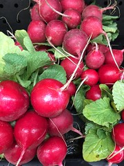 Red Radishes (joncutrer) Tags: food produce vegetables cc0 royaltyfree cooking ingredients red radish
