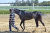 2016-10-16 (24) r3 #2 Synergist heads back to the barn (JLeeFleenor) Tags: photos photography md maryland marylandhorseracing marylandracing laurelpark horses thoroughbreds equine equestrian cheval cavalo cavallo cavall caballo pferd paard perd hevonen hest hestur cal kon konj beygir capall ceffyl cuddy yarraman faras alogo soos kuda uma pfeerd koin حصان кон 马 häst άλογο סוס घोड़ा 馬 koń лошадь outdoors outside grey gray