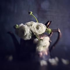 Winter Tea (AJWeiss71) Tags: teapot stilllife flower flowers floral white kettle antique old oldfashioned season seasonal mood moody fashioned lowkey dark darkness nostalgia nostalgic classic classical sorrow melancholy simple simplistic lensbaby amyweiss sol45