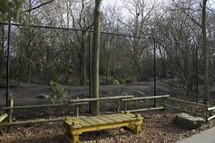 Grey Wolf exhibit (kevinvarzoos) Tags: exhibit diergaarde blijdorp rotterdam zoo