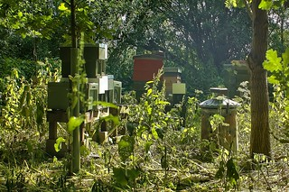 Honey Bee Hives, Yorkshire, UK, 01072018, EOS 1Ds, Jcw1967 (5)