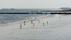 Beach Life (Future-Echoes) Tags: 2016 beach birds coast essex groynes gulls light pier reflections sand sea seagull waltononthenaze tamronsp90mmf2811macro tamron