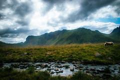By the stream (mabuli90) Tags: stream creek river water grass mountain clouds sky light sheep norway lofoten rock