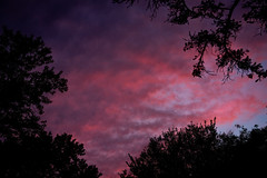 Looking Through Trees At the Last Light of Day (John Brighenti) Tags: photography sony alpha a7ii ilce7m2 trees tree leaves sunset sky clouds orange red blue silhouette evening night dusk twilight black dark rockville maryland md twinbrook