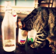 fencing's curiosity (me, paolo and the seven wonders + two&little3) Tags: fencing gatta chat cat bicchieri bottiglia curiosità picmonkey