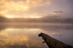 Brilliance (gwendolyn.allsop) Tags: sunrise takhlakh lake washington gifford pinchot national forest water reflection mist golden yellow color morning d5200 mt adams