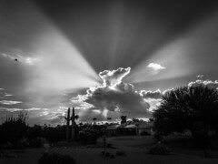 Message Received (oybay©) Tags: arizona sunset monsoon cloudy clouds saguaro cactus silhouette color colors nature natural orange yellow red purple outdoor sky dusk cloud city landscape blackandwhite bandw bw black white
