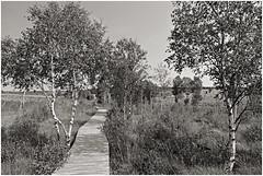 baraque michel 19 (beauty of all things) Tags: belgien belgium hohesvenn baraquemichel moor stege holzstege landscape landschaft sw bw