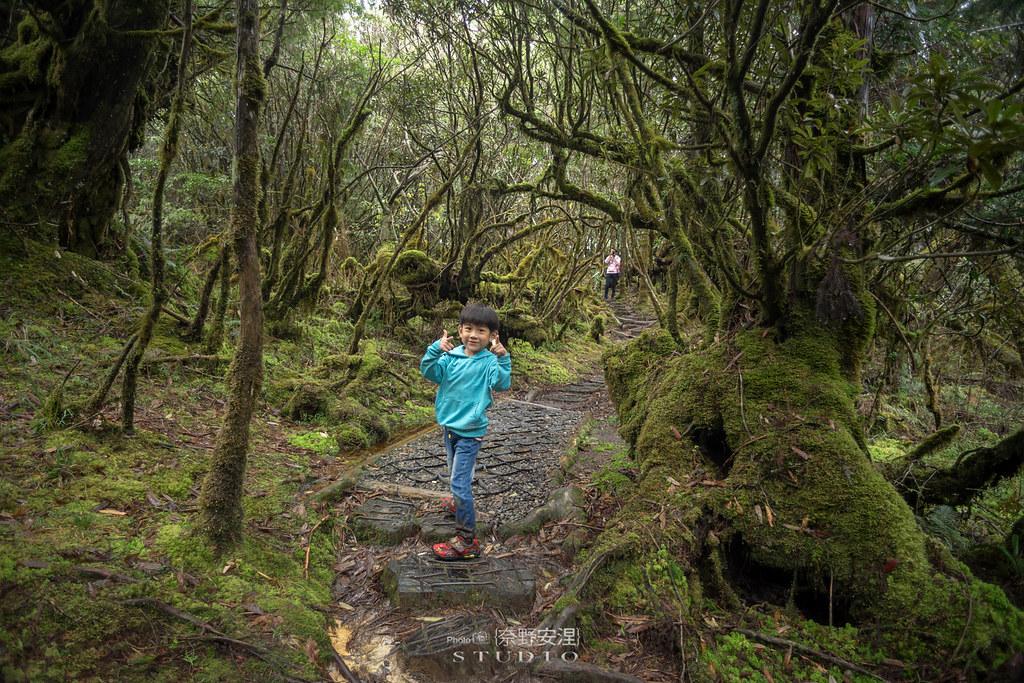 太平山翠峰湖環山步道 |走在泥濘的道路上,只為途中美景 | 宜蘭大同鄉56