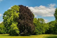 Tricolore (Ronny Darko) Tags: trees grass gras wiese natur nature landscape gestalt figure fantasy phantasie fantasie clouds wolken himmel sky sommer summer foliage green germany travel reise park