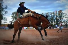 Rafa Cardoso e Mistério (Eduardo Amorim) Tags: gaúcho gaúchos gaucho gauchos cavalos caballos horses chevaux cavalli pferde caballo horse cheval cavallo pferd pampa campanha fronteira quaraí riograndedosul brésil brasil sudamérica südamerika suramérica américadosul southamerica amériquedusud americameridionale américadelsur americadelsud cavalo 馬 حصان 马 лошадь ঘোড়া 말 סוס ม้า häst hest hevonen άλογο brazil eduardoamorim gineteada jineteada