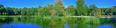Lac de Sauvabelin (Diegojack) Tags: vaud suisse lausanne d500 nikon nikonpassion assemblage montage panorama lac eau plandeau plantes sauvabelin