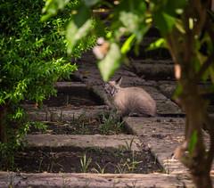 Having A Snack (TheTomL3) Tags: cat gato chat park parque parc canon eos 600d canoneos600d teamcanon urbanlife kitten predator