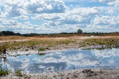 Wezepsche Heide (Gerrit Veldman) Tags: dutch gelderland holland nederland netherlands wezep wezepscheheide heide heath water plas waterplas pool sky clouds landschap landscape natuur nature olympus epl7