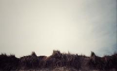 Sand dunes, Norfolk. (paul139) Tags: leica leicar8 r8 film analogue agfavista agfavista200 expiredfilm istillshootfilm norfolk sanddunes