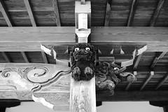 20180819 Iwayado 1 (BONGURI) Tags: 瀬戸市 愛知県 日本 jp bw monochrome blackandwhite 白黒 モノクロ モノクローム shishi lion 獅子 guarian wood woodcarving carving 守り神 守護 木彫り 彫り物 eye looking gazing 目 眼力 眼 注視 注目 jogenji jogenjitemple temple buddhism sodosyu sodoschool 曹洞宗 浄源寺 寺院 寺 seto 瀬戸 aichi 愛知 nikon df cosina cosinavoigtländernokton58mmf14sl2n