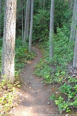 2018-08-18 Whistle Lake Trail 205 (11) (680x1024) (-jon) Tags: anacortes skagitcounty skagit fidalgoisland sanjuanislands washingtonstate washington pnw pacificnorthwest salishsea pugetsound acfl anacortescommunityforestlands whistlelake lake trail path 205 nikon nikonl22 tree douglasfir fern alder summer woods forest a266122photographyproduction hiking hike walk walking