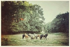 Horses! (glasseyes view...up&away) Tags: glasseyesview green meadow mecklenburgvorpommern horses woods forest landscape
