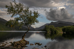 That darn tree (Maisiebeth) Tags: lonetree tree snowdon mountains clouds lake padarn reflections rower kayak canoe