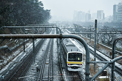Tokyo in the white (Pop_narute) Tags: tokyo city white snow train railway transportation street snowy landscape tree jr