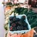 Market Blackberries