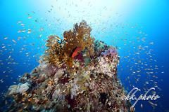 Diving Wonderworld (chk.photo) Tags: animal diving scuba water underwater dive fish ocean dolphin tauchen
