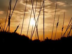 (docwiththecamera) Tags: goldenhour vibrant cloud sunset sun