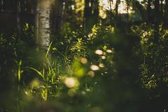 Midsummer18-3 (junestarrr) Tags: summer finland lapland lappi visitlapland visitfinland finnishsummer midsummer yötönyö nightlessnight kemijoki river