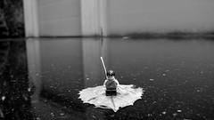 Leaf me alone rain (255/365)