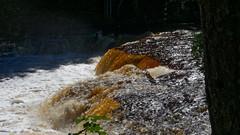 The Lower Falls (joeldinda) Tags: waterfall falls woods forest tahquamenonfallsstatepark upperpeninsula tree lowerfalls river em1ii omd september 4218 em1 omdem1mkii olympus michigan attractions vacation 2018