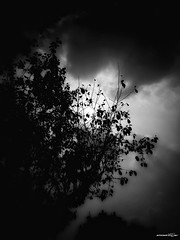 dark side (Massimo Vitellino) Tags: nature landscape skyland sun silhouette outdoors trees clouds lights shadows hdr blackandwhite abstract conceptual contrast noperson