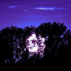 Marsian Sunset (redfurwolf) Tags: sunset mars trees clouds bluesunset sun blue redfurwolf sonyalpha tamron150600g2 sony bealpha nature landscape outdoor square squarecrop
