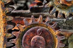 Cogwheel (holly hop) Tags: mm cogwheel macromonday macro rustyandcrusty rusty rust machinery agriculture sedge808sfaves