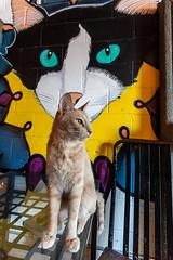 Javacatscafe08Sep20180344.jpg (fredstrobel) Tags: javacafecats javacatscafe atlanta places animals ga pets cats usa georgia unitedstates us