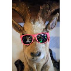 This isn't cool, my deer (Robyn Hooz) Tags: cervo deer hunt glasses mirror corna horns dead caccia testa head beheaded chop appeso morto corpse ilovetheanimals