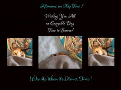 Afternoons are Nap Time! (jlynfriend) Tags: phonephoto lg card note cat calico blanket cover comforter quilt art illustration