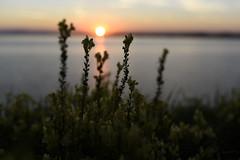 despite repeated warnings (summer_57) Tags: landscape poland primelens sigma1435 nikond750 bokeh lake sunset september summer