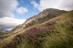 Wales 006 (maurovinco) Tags: wild flowers mountain heather sky clouds grass wales galles nuvole cielo montagna erba panorama landscape nikon d750