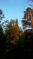 Góry Stołowe, Poland (trampinthevoid) Tags: poland polska góry stołowe sudety tree trees rocks rock forest summer spring szczeliniec sunset mountain mountains dolnośląskie june