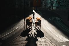 Dog days of summer. (ewitsoe) Tags: 35mm cityscape ewitsoe nikond80 street warszawa erikwitsoe people summer urban warsaw dog reflection reflect nikon city pet animal doggy dogs leash outforawalk