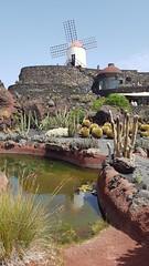 Jardin de Cactus - Lanzarote - 2018-09-13 (BillyGoat75) Tags: cactus cacti garden windmill reflection jardindecactus gauliza lanzarote thecanaryislands spain