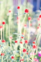DSCF0926 (Keishi Etoh rough-and-ready photoglaph) Tags: fujifilm xt1 fujifilmxt1 apsc mcrokkorpf55mmf17 minolta rokkor 825mm mf manualfocuslens primelens fixedfocallengthlens oldlens 単焦点 中望遠 flower