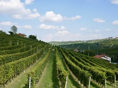 Barolo (docwiththecamera) Tags: wineyard hill sky cloud clouds field piemonte barolo italy