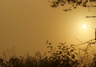 The sunrise and fog.