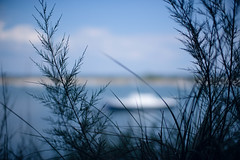 Schlupfloch (trsl1234) Tags: grass water sea landscape bay boat