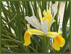 Ronda 17 flor de Casa de Don Bosco.CR2 (ferlomu) Tags: ferlomu flor flower málaga ronda