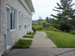 I Should Chase That Squirrel (navejo) Tags: sherbrooke quebec canada dog grass tree motel lawn gizmo