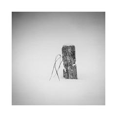 I (rwasinger) Tags: winter winterly winterzeit snow schnee bw blackandwhite monochrome monochrom minimalismus minimal minimalism minimalist mono new weather noiretblanc flickr deutschland naturephotography