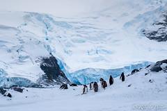 ANT180314-0036 (robertopastor) Tags: antarctica antarctique antarktika antartic antártida caletacierva fuji robertopastor xt1 xf1655mm aq